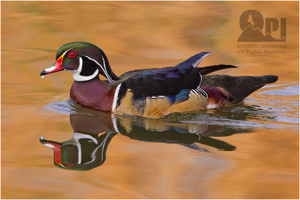 Opperman_WoodDuck